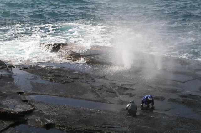 十六島海苔の収穫風景